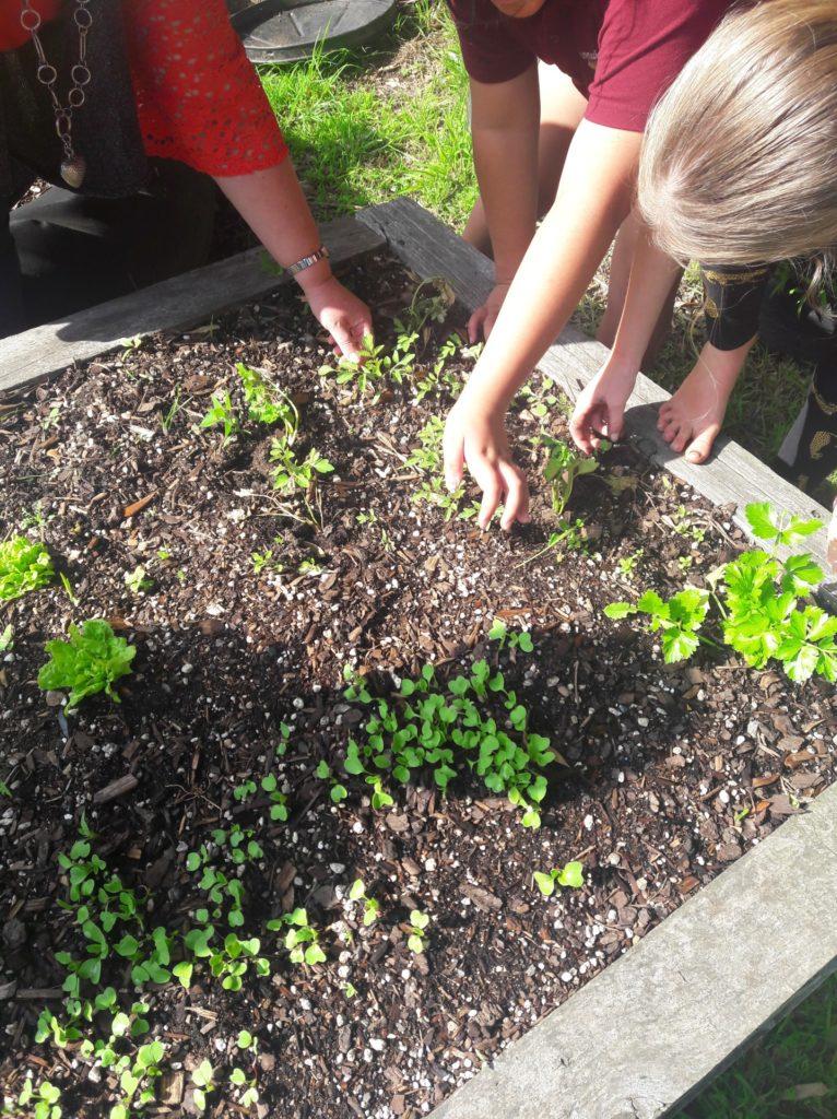 Aranui School veggie garden