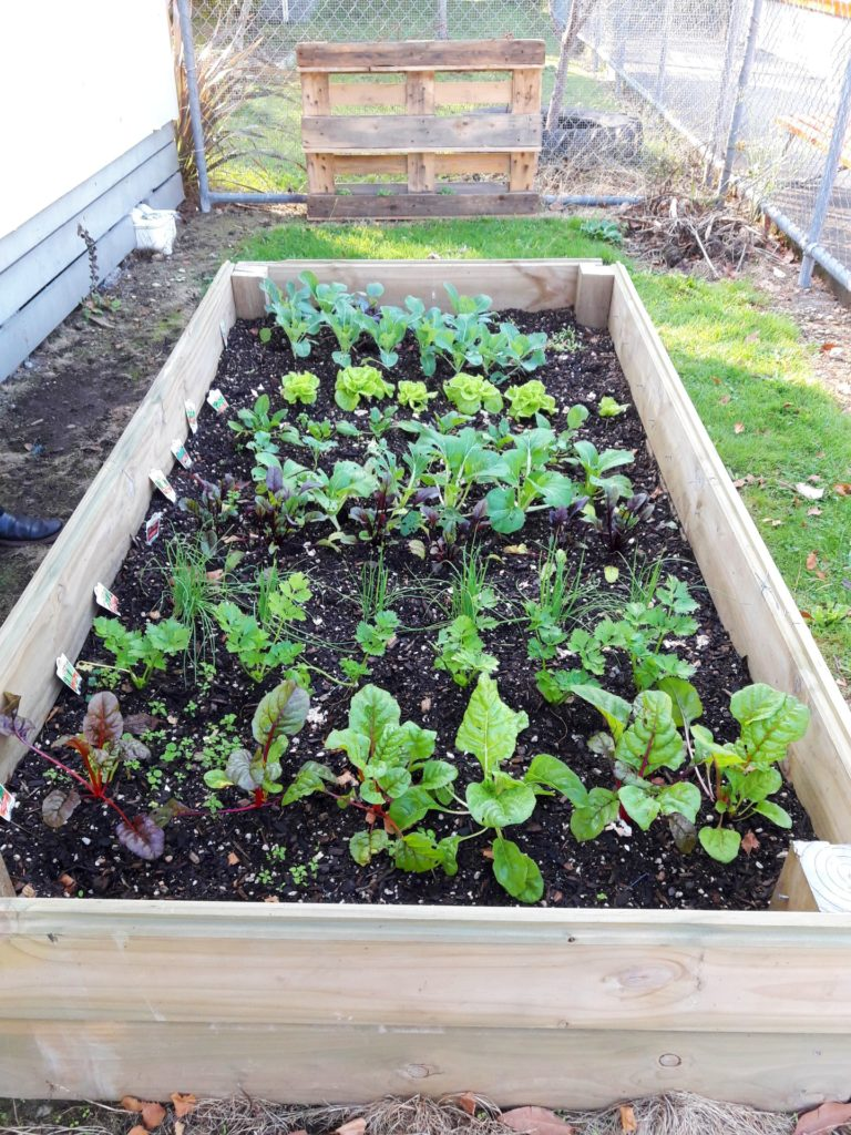 Churton School Vegetable Garden